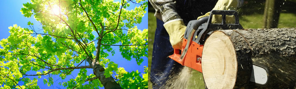 Tree Services Bennington